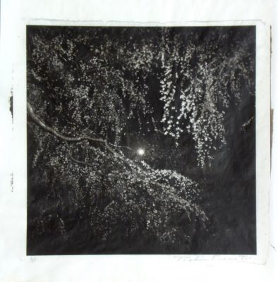 A tree in full bloom under the moon, Kyoto Imperial Palace, Toshio Enomoto, 2013