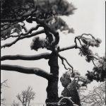 Hiroshi Watanabe - Zenkoji 3, toned gelatin silver print