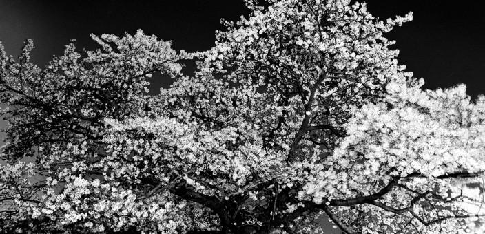 """""""Kagirohi"""" – S/W-Fotografien von Toshio Enomoto"""