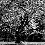 Toshio Enomoto, Kagirohi 026, 2001