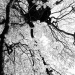 Toshio Enomoto, Kagirohi 028, 2004