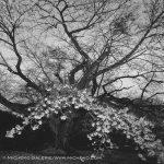 Toshio Enomoto, Kagirohi 030, 2007