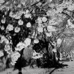 Toshio Enomoto, Kagirohi 032, 1998