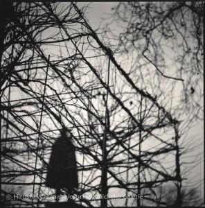Grosvenor Square, Hiroshi Watanabe