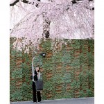Sakura, Japan 2004, Robert Voit